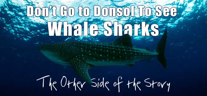 Don't Go To Donsol To See Whale Sharks: The Other Side of the Story (Part 2)
